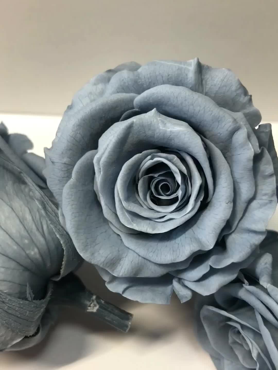 Preço de fábrica Diâmetro tamanho 4-5 CM Real Preservado Rosas Para Sempre Eterno Cinza Fumarento Yunnan FancyRose