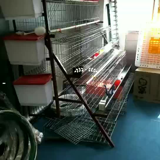 2018 Guangzhou Factory Chicken Broiler Cages For Kenya