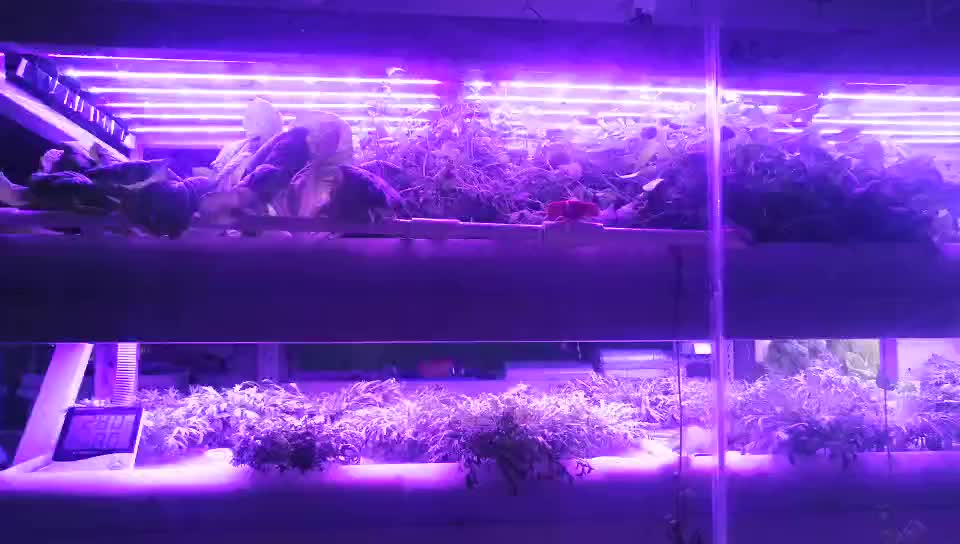 Indoor Automated Vertical NFT Hydroponic Supplies Growing Systems