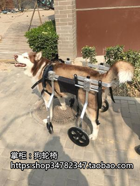 Disabled pet dog wheelchair large forelimb wheelchair