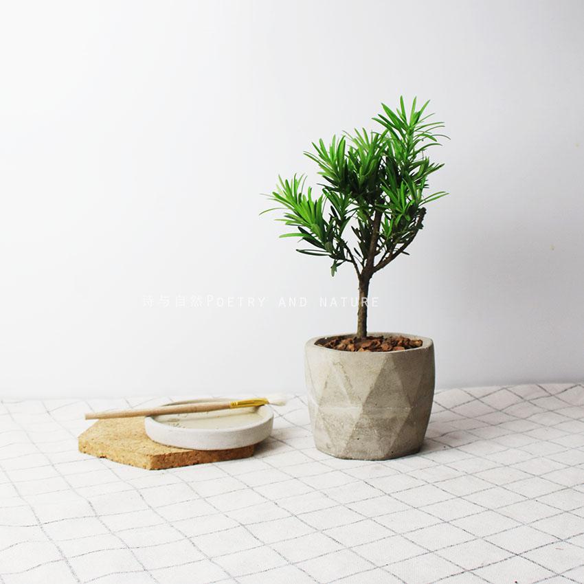 诗与自然 罗汉松盆景 木本植物 小树 书桌 耐养 庭院茶桌盆栽