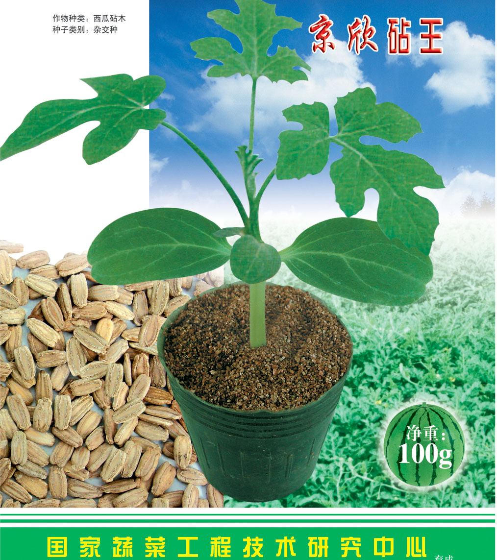 西瓜砧木种子 葫芦籽