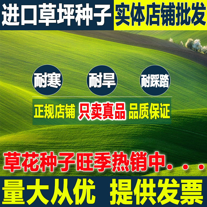 Four Seasons Green lawn seeds ryegrass dog root-free cutting low manila slope turf Grass Seed garden greening