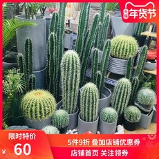 Northern Europe large simulation cactus cactus style flower pot tropical desert green plant potted ornament