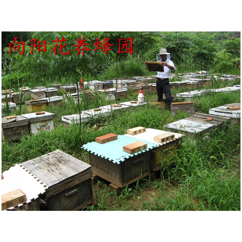 蜜蜂 蜂群 意蜂群 蜂王 无王群 笼蜂 带蜂箱 带巢脾 活体邮寄出售