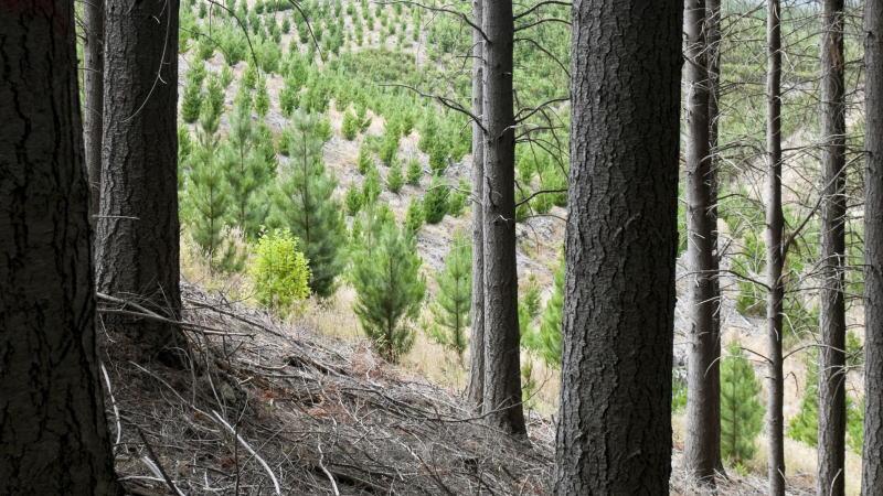 为了减少碳排放,荷兰皇家壳牌公司决定开始种树