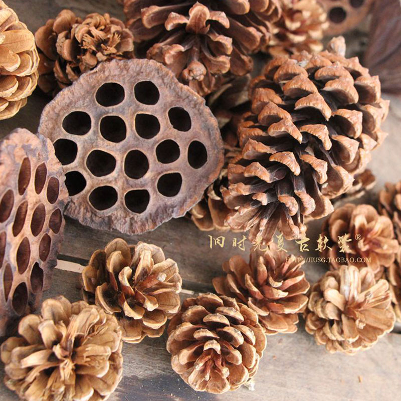 10 yuan 35 pine nuts and dried flowers lotus flower shooting 10 yuan 35 pine nuts and dried flowers lotus flower shooting auxiliary props clothing store decoration mightylinksfo