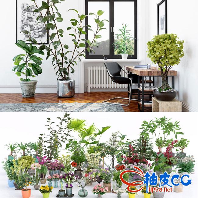 3DSMAX室内装饰设计盆栽花卉植物3D模型 Archmodels vol. 173
