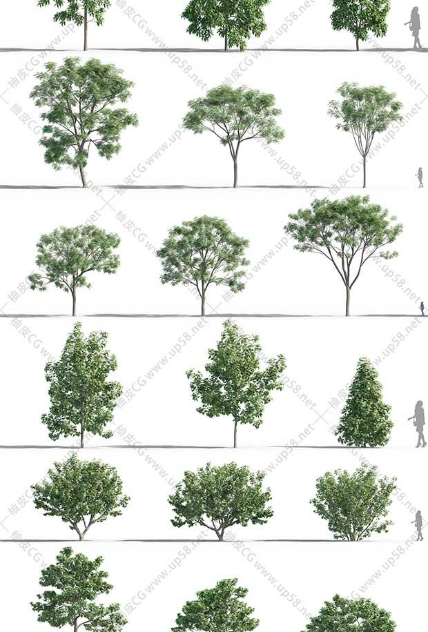 3DSMAX / VRay / Corona椿树桑树槐树木槿榆树园林设计树木3D模型