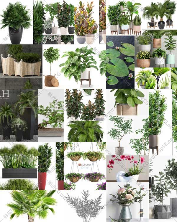 室内装饰盆栽花卉植物精细3D模型合集