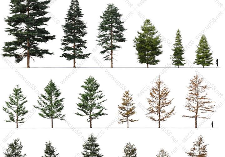 72个3DSMAX / VRay / Corona雪松柳杉落叶松乔松冷杉落羽树木植物3D模型