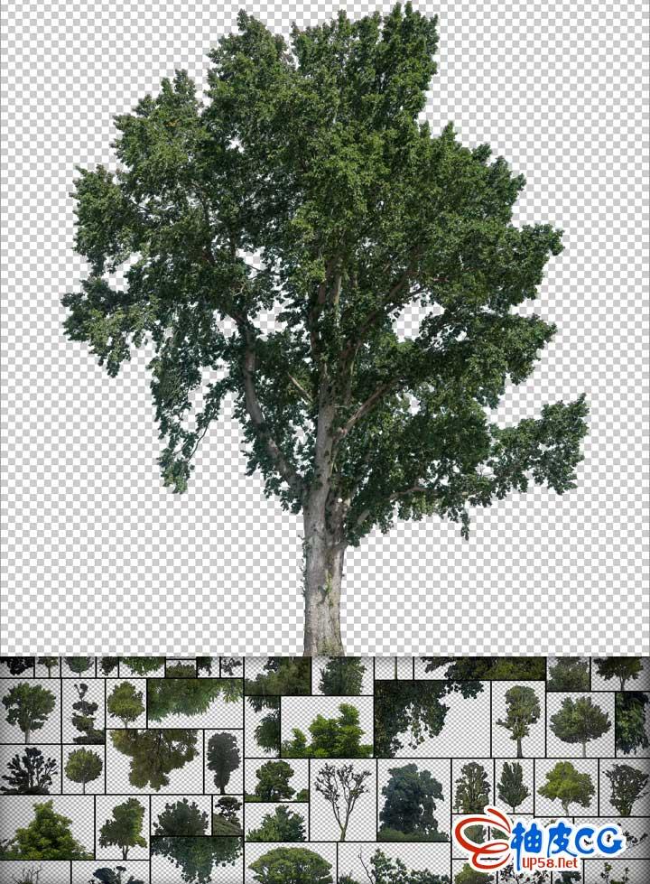 80+个背景透明免扣树木植物后期配景高清平面设计素材