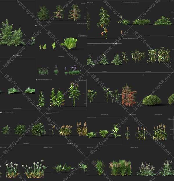3DSMAX / VRay / Corona洋葱油菜辣椒胡萝卜烟草水稻蔬菜植物精细3D模型