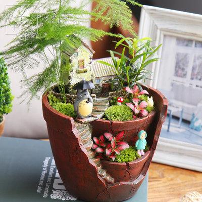 子乐湾微景观迷你盆栽苔藓微景观小盆栽diy创意盆栽微景观植物