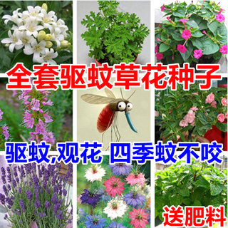 Mosquito repellent floral seed mosquitorate plant seed lantantry combination 草 驱 驱 内