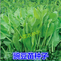 Pea seedling seed fertilizer pea tip asparagus vegetables chongqing