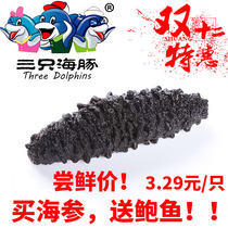 Turkish sea cucumber millet thorn Pure wild Pure Dry with thorn original special price