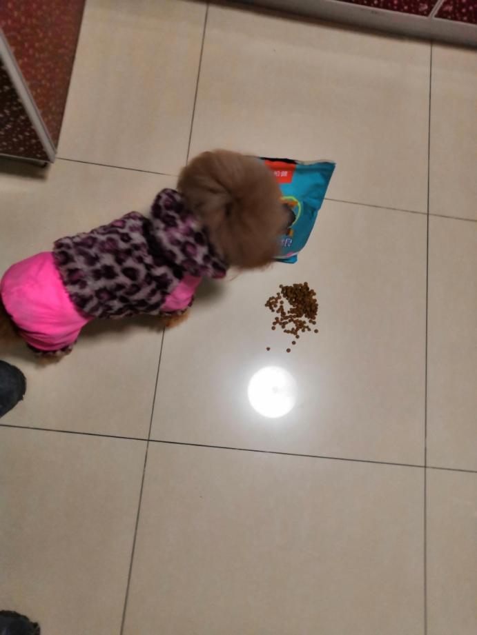 康柏健品牌这款狗粮,我家博美很爱吃