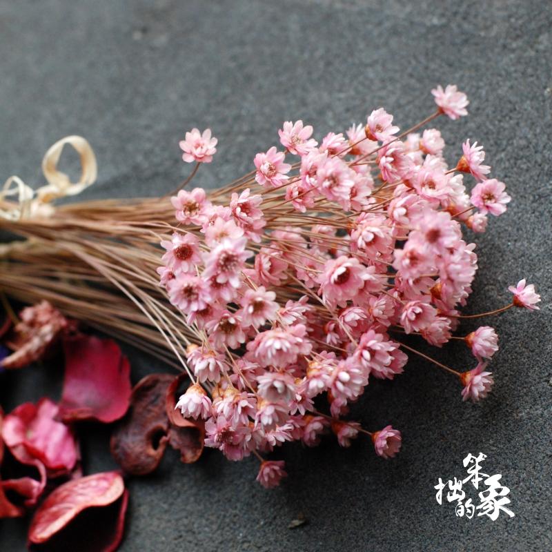 Usd 623 Brazilian Star Flower Mini Small Daisy Dried Flower