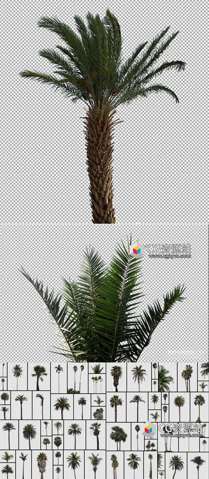 63组棕榈树PNG格式高清图片合集