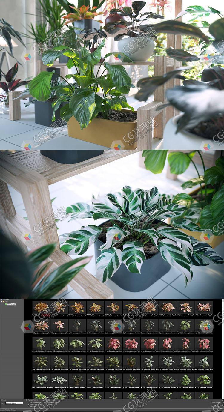 72种单模高质量盆栽花卉植物3D模型