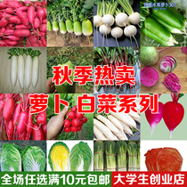 Vegetable seeds Spring sowing cherry carrot fruit radish carrot Heart