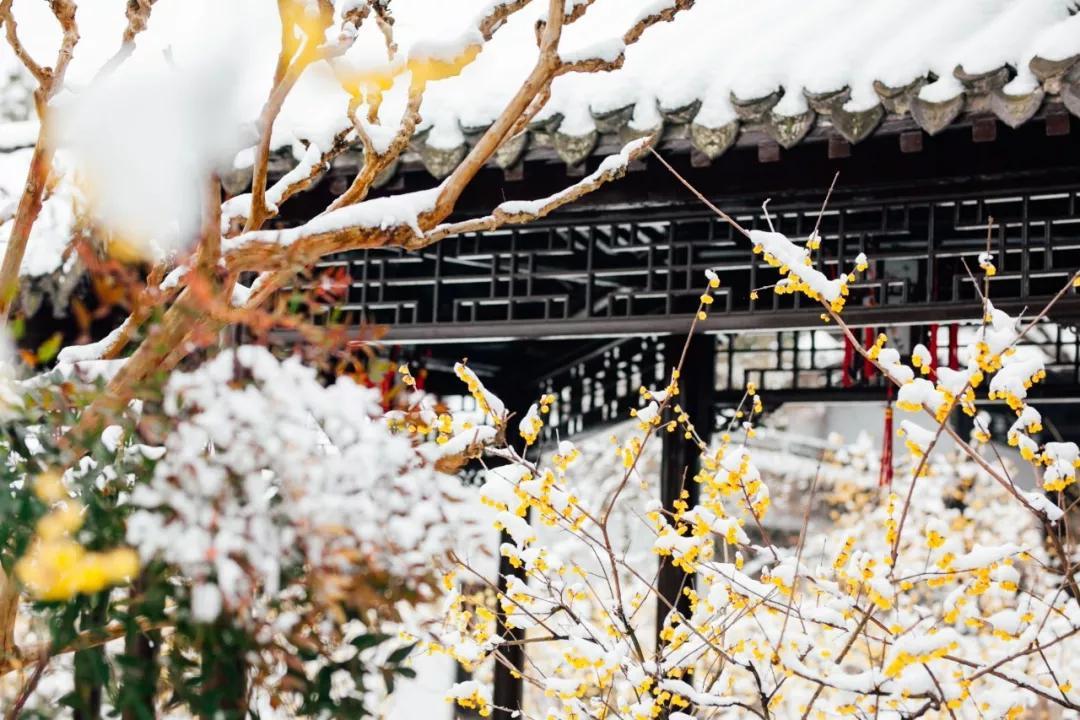 喜提2020第一场雪!雪后的江南美爆了64