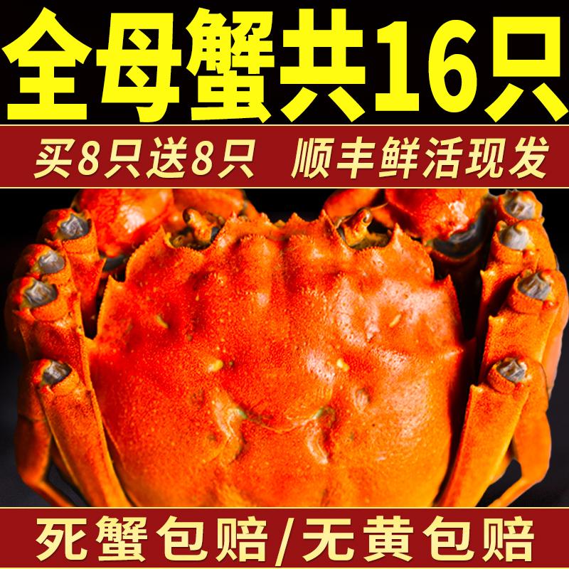 16只全母鮮活螃蟹湖蟹六月黃