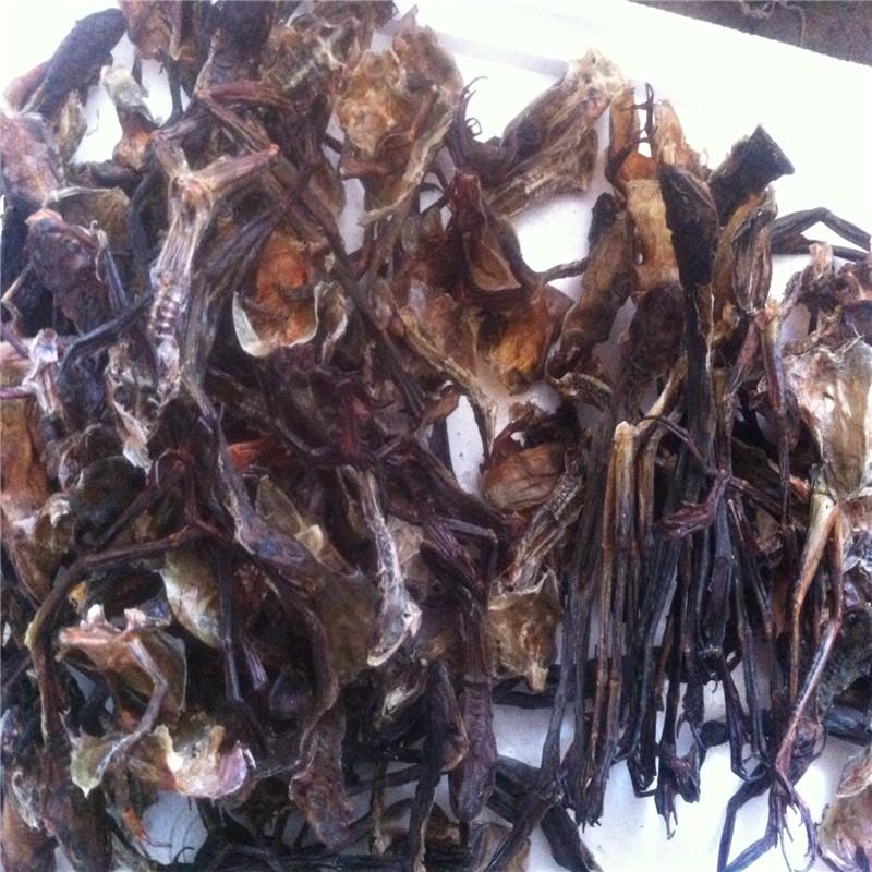 Лес лягушка кожа жаба снег моллюск кожа рационализировать после 70 фунт фигура выбранный лес лягушка масло лес лягушка кожа сухой многочисленные продавать