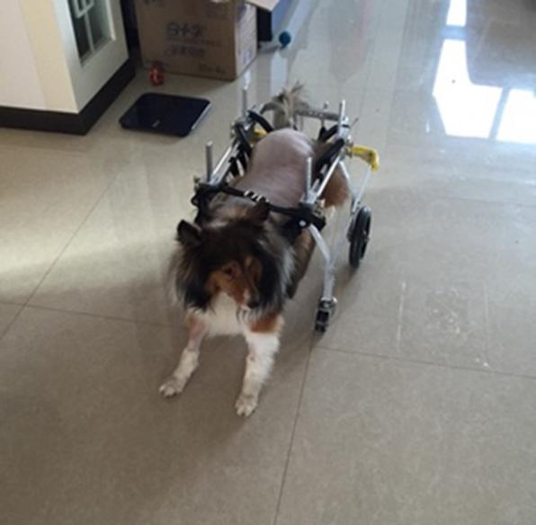 Dog wheelchair disabled pet walker wheelchair large dog hind leg scooter  rehabilitation wheelchair car hind leg quad