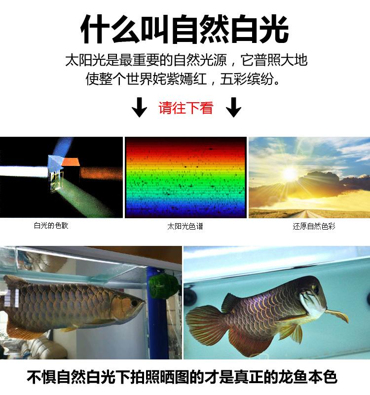 红金龙鱼专用灯飞利浦红龙灯潜水灯鱼缸水族防水中照明灯详细照片