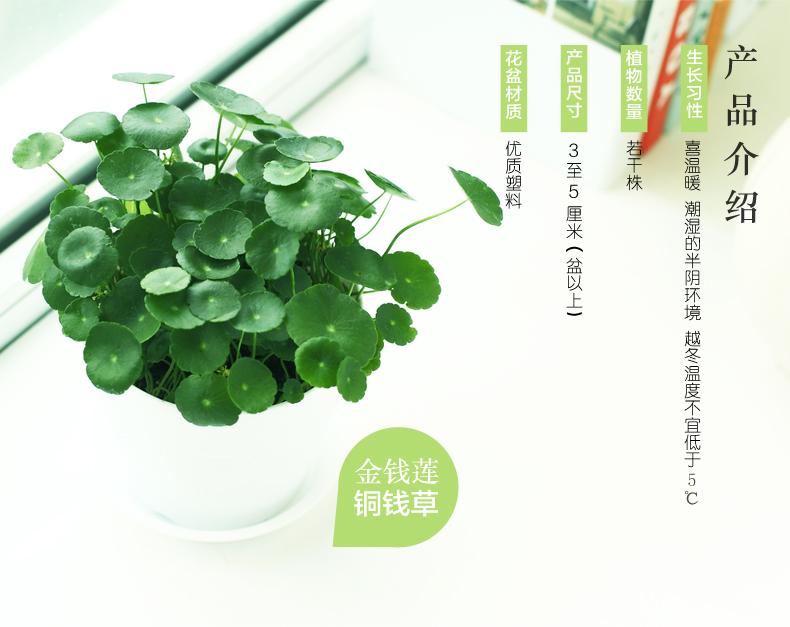 通钱草750_02.jpg