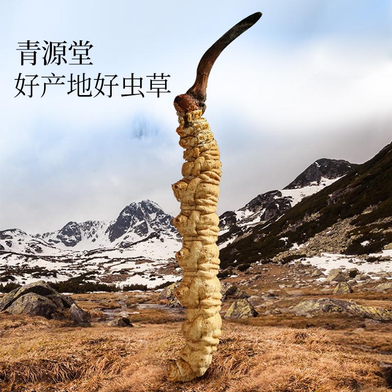 冬虫夏草5条/克正品东虫草干货礼品送长辈搭野生西藏那曲特产级