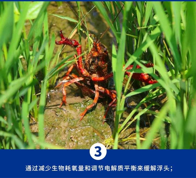 补钙水产养殖专用钙小龙虾脱壳素水产钙颗粒钙锌镁离子钙水产补钙详细照片