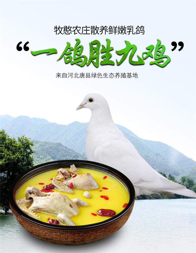 牧憨农庄 新鲜土鸽子 乳鸽 3只共1000g 天猫优惠券折后¥83顺丰包邮(¥98-15)