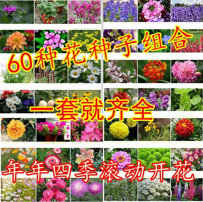 花花卉盆栽种易活室内阳台不断开花套餐种子四季花籽种子v花卉包邮