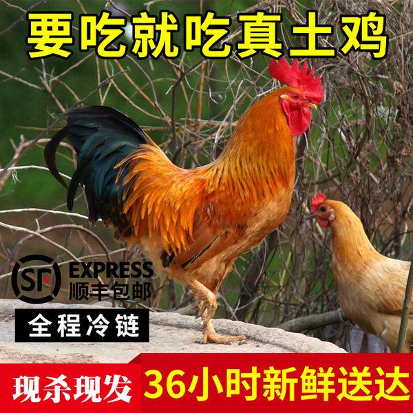 态谷食代 生态散养 襄阳土鸡 公鸡 2只共2500g 双重优惠折后¥69包邮