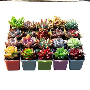 Free shipping toot green anti-formaldehyde home green plants easy to feed indoor real plants purification gardening decoration set