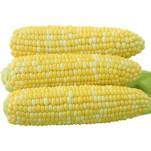 云南新鲜现摘牛奶甜玉米10斤