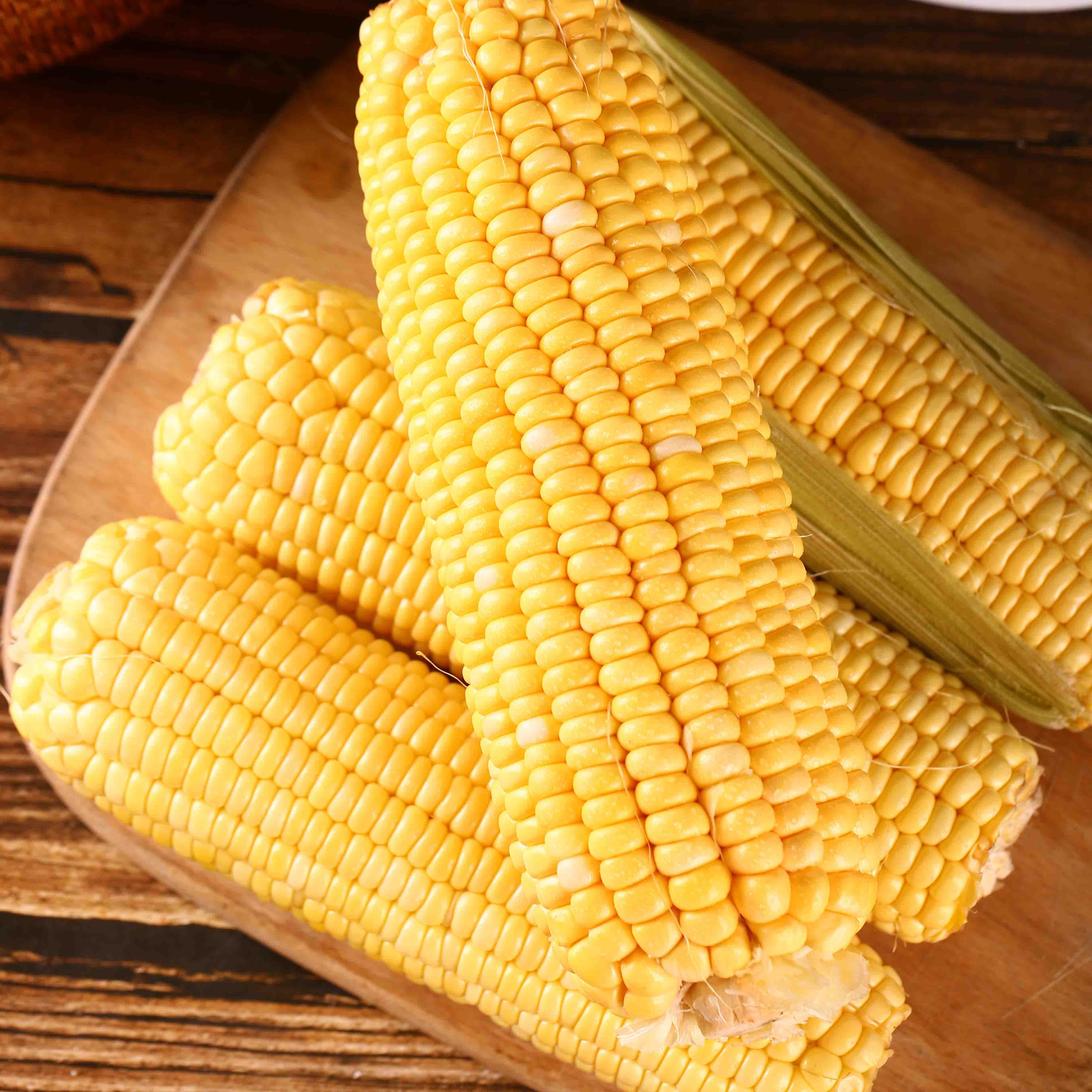 果园直供净重9斤云南爆浆水果玉米