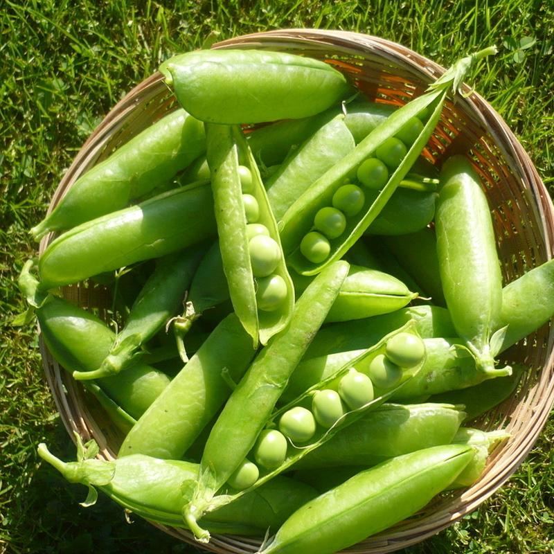 河南本地新鲜豌豆荚9斤装现摘现发5斤3斤青豆角粒蔬菜甜豆荚饱满