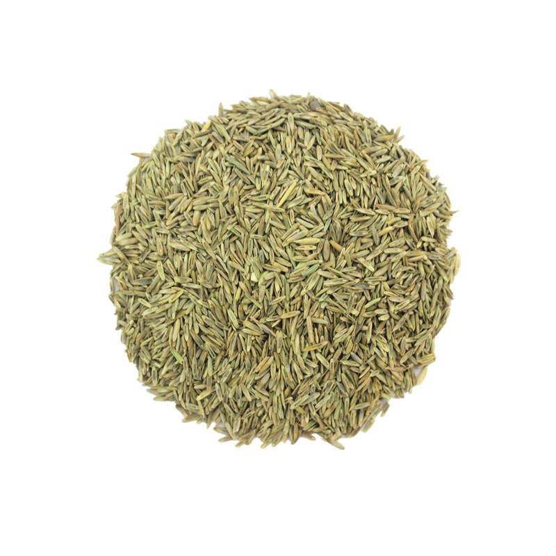 进口耐寒牧草种子多年生黑麦草种子四季常青鸡鸭鹅猪牛羊鱼草种籽