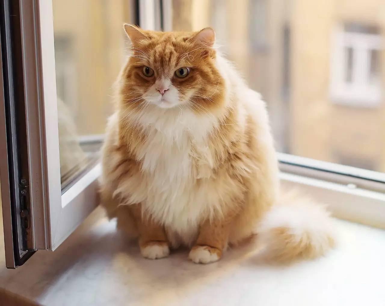 当你拥有这些东西,养猫会变得更方便哦!