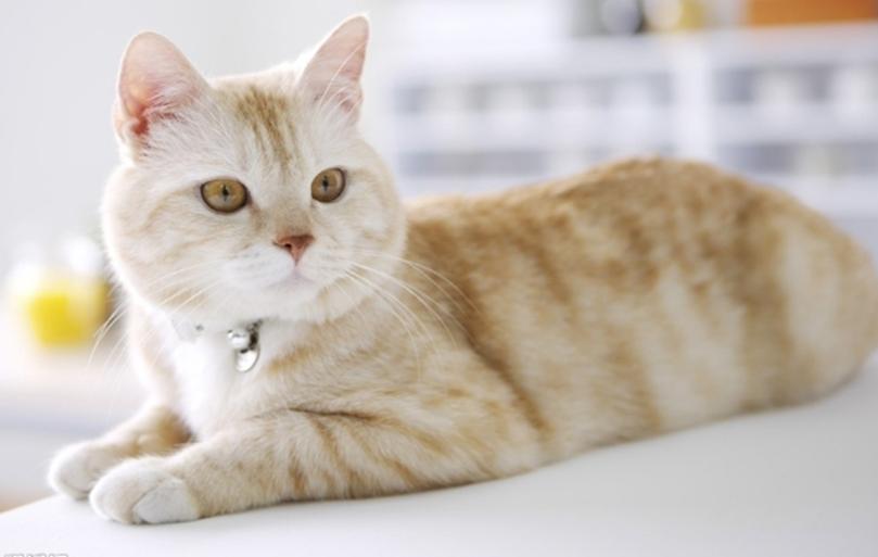 为什么幼猫要少吃猫罐头?原因都在这