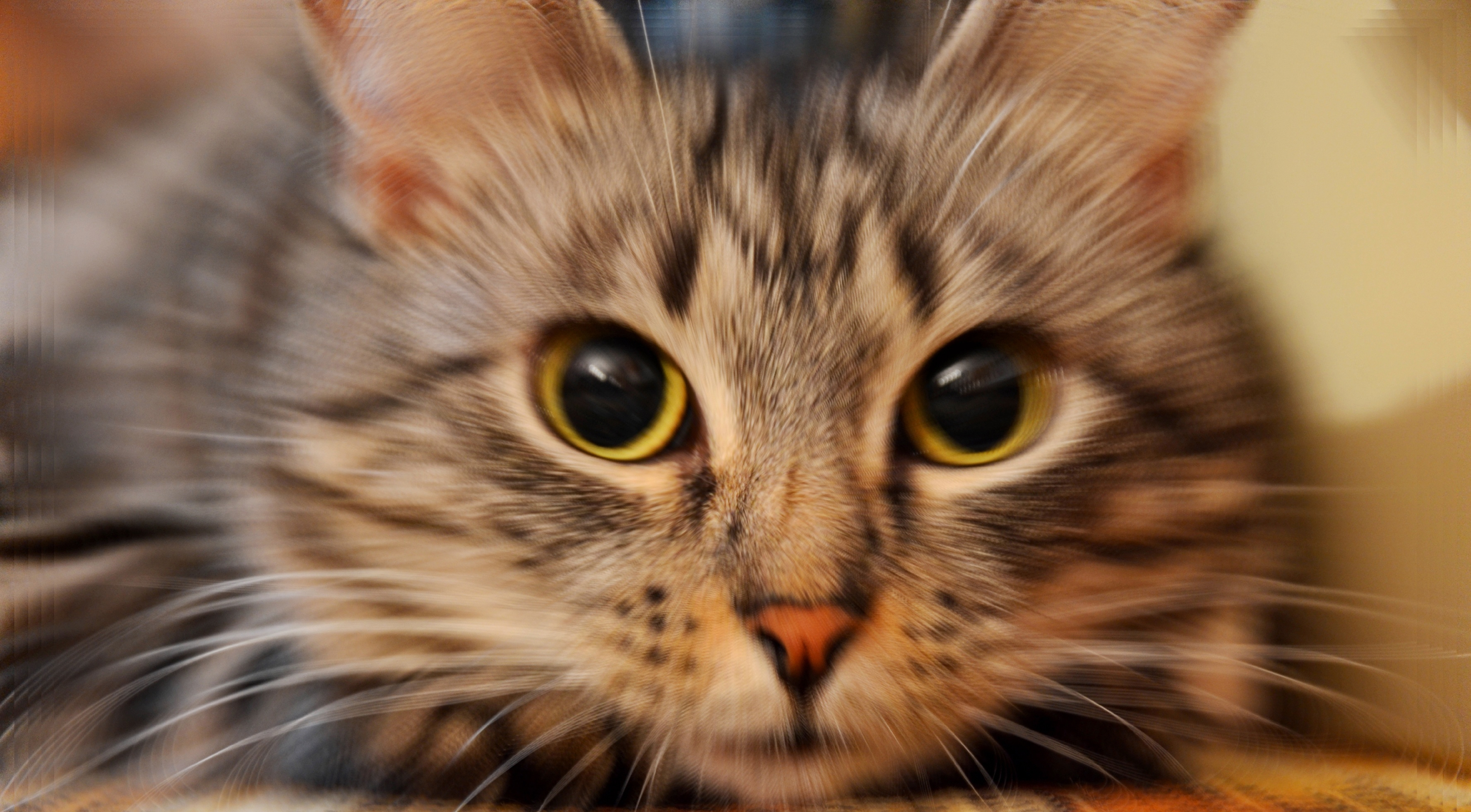 猫生病有哪些表现?别让你的忽视成为遗憾