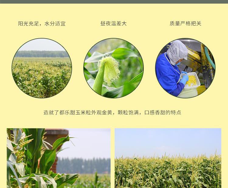 都乐甜玉米粒大包甜玉米非基因改造开袋即食水果玉米新鲜沙拉详细照片