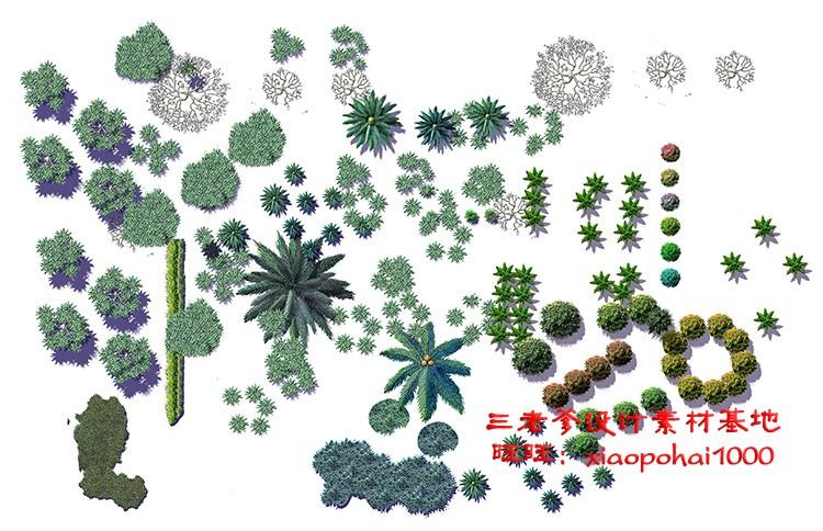园林景观PS彩色总平面图案笔刷立面填充植物铺装psd分层设计素材插图(23)