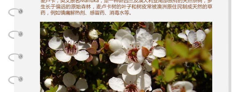 澳洲原装进口绿之华天然野生纯净麦卢卡蜂蜜5+活性 MGO 100 1kg ¥288.00 产品系列 第7张