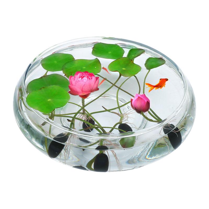 碗莲水培植物睡莲水生荷花盆栽四季易活办公室内盆栽绿植水养花卉