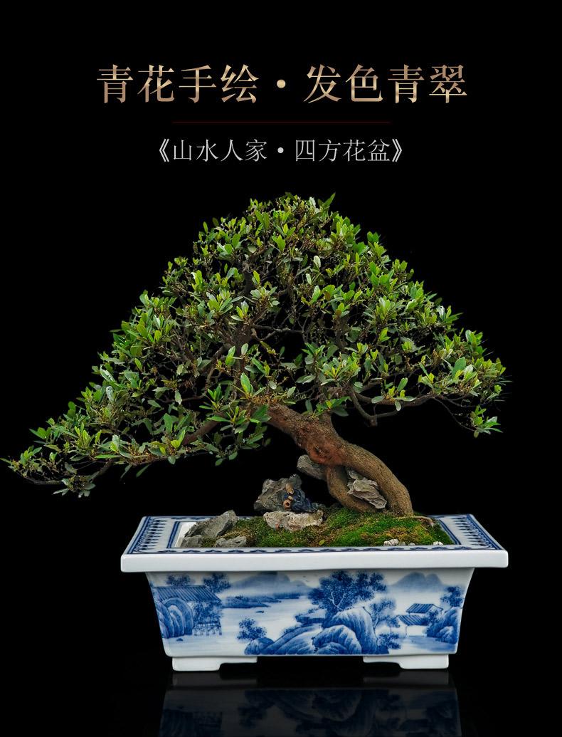 Jingdezhen blue and white porcelain hand - made gentleman orchid dedicated bonsai POTS rectangular floor furnishing articles creative desktop